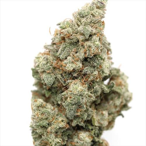 Cherry Punch Medical Marijuana