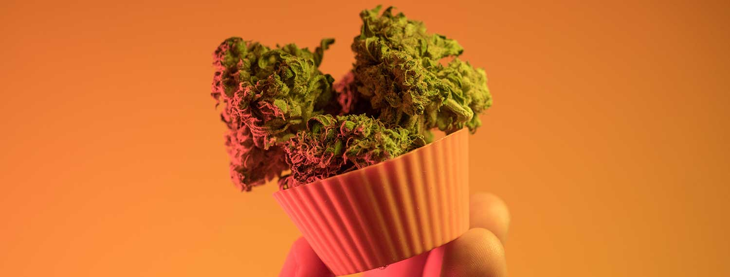 Cannabis Edibles 101: Effects, Dosing & How to Find the Right Edible For Beginners